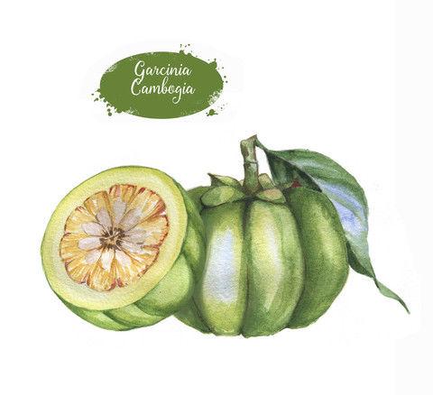 Základná zložka Garsinu je Garcinia cambogia