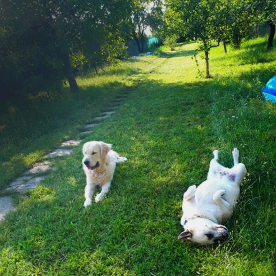 Bimbo, Rambo a záhrada
