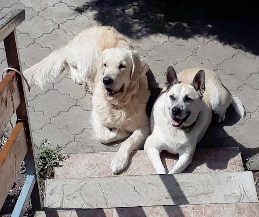 Mám dvoch psov a mali by byť strážny