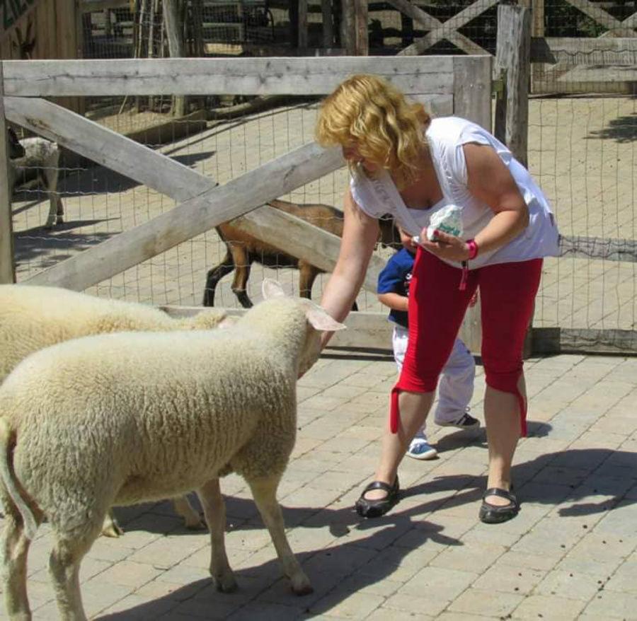Ako spolu súvisia menštruácia a ovečky?