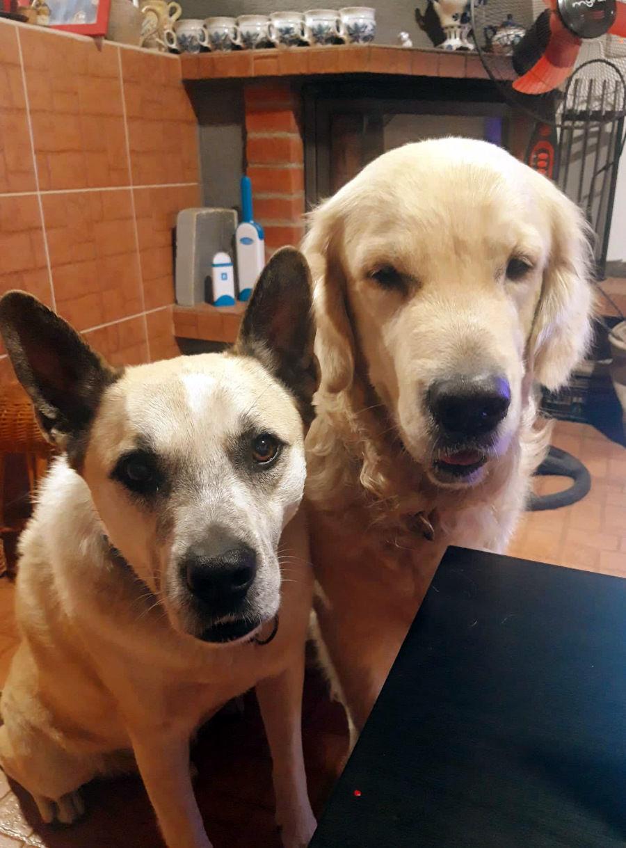 2 psíci