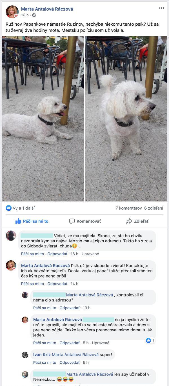 Stratený psík na Papánkovom