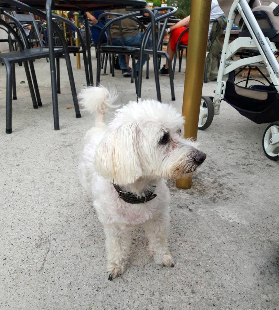 Stratený psík a sociálne siete