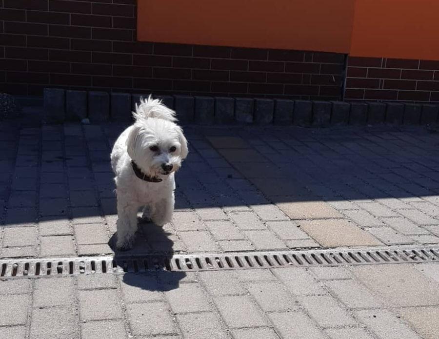 Stratený psík ide domov