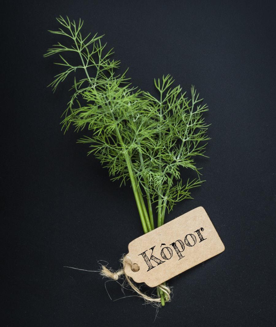 Kôpor, korenina aj liečivá bylina
