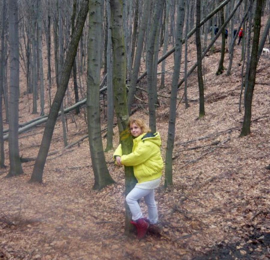 Objímka stromov, hlodavce mimo záberu