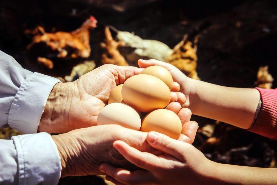 Vajíčka a sliepočky