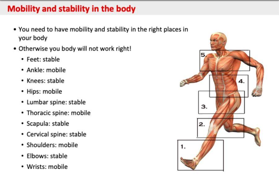 Mobilita a stabilita častí tela pri bowlingu