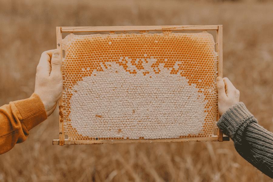 Včelí med účinky