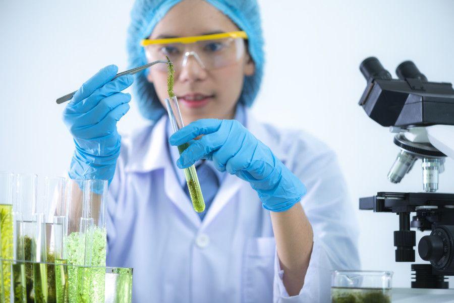 Vedkyňa skúma riasy