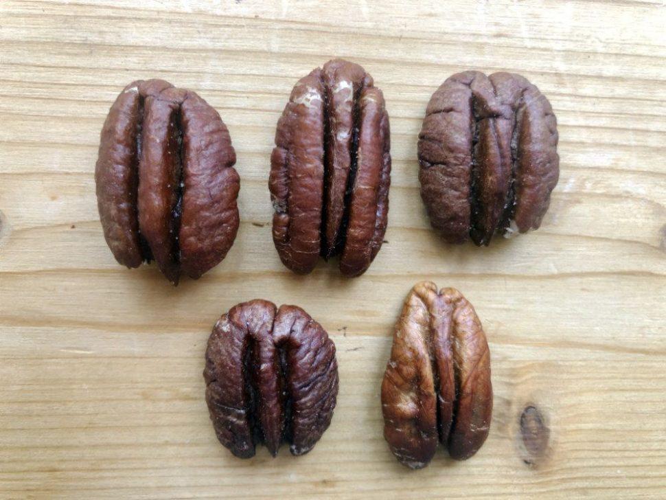 Pekanové orechy